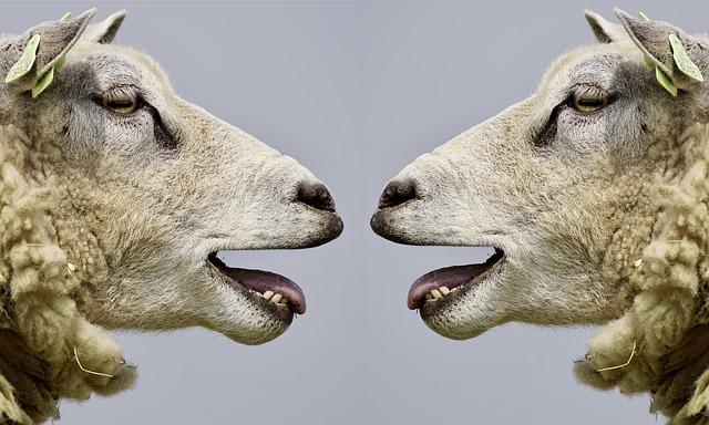 Arroganz und Inkompetenz – Die Rezeptur für schlechte Leistung